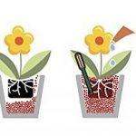 achat plante de bassin TOP 0 image 4 produit