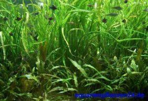 achat plante de bassin TOP 1 image 0 produit