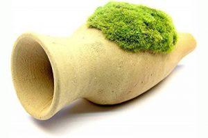 achat plante de bassin TOP 8 image 0 produit