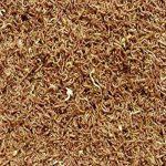 algue dans étang TOP 7 image 3 produit