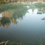 Bassin Filet 3m x 6m feuilles Protection Héron Filet Silo Filet anti-oiseaux Prix de base par M² 0,62& # x20ac; de la marque Aquagart image 2 produit
