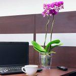 Cache pot a orchidees Coubi violet transparent 16 cm de la marque Prosperplast image 2 produit