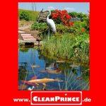 dans l'étang-algues-gratuit 1 Litre Algenvernichtung (Destruction des Algues) Algues bleu - vert Algues brunes Purificateurs d'étang étang Nettoyant Teichrein Nettoyage Clarification Eau de la marque CleanPrince image 1 produit