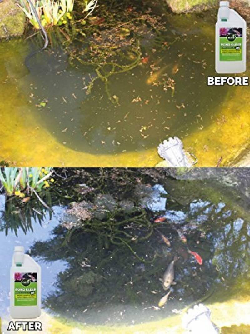 Le comparatif de : Eliminer algues vertes bassin pour 2019 ...