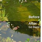 Envii Natural Pond Klear - Nettoyeur Pour Bassin Qui Élimine L'eau Verte et Traitement Qui Débarrasse Des Algues (Traite 20 000 Litres) de la marque Envii image 2 produit