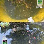 Envii Pond Klear Xtra - Algicide Pour Bassin Utilisant Des Bactéries Pour Éliminer L'eau Verte et Les Algues, Sans Risque Pour Les Poissons, Ni Les Animaux Domestiques - 1 Litre de la marque Envii image 2 produit