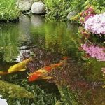 grogreen Pond Relief, Sachet de 200g de la marque GroGreen image 1 produit