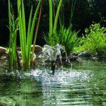 kit bassin poisson TOP 1 image 4 produit