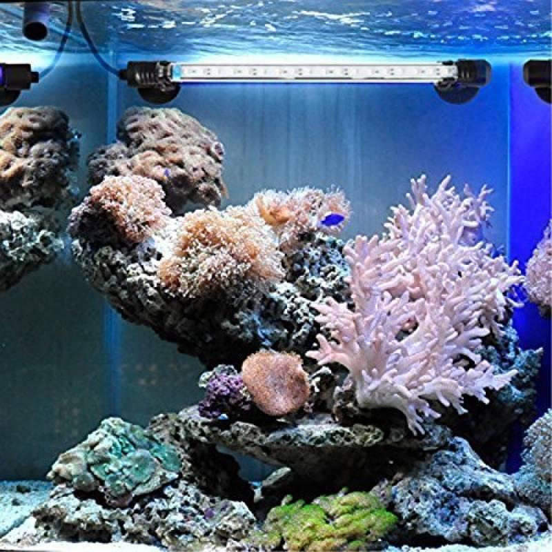 Bassin Notre Pour Lampe Submersible ; 2019 Comparatif 1J3lcTFK