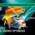 poisson bassin extérieur hiver TOP 10 image 4 produit