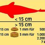 Sera - Koi Professional - Nourriture spécial couleurs pour poissons - Carpes koï - À base de spiruline - 1 x 2.2 kg de la marque SERA image 3 produit