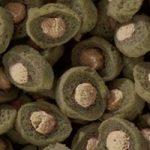 Sera - Koi Professional - Nourriture spécial couleurs pour poissons - Carpes koï - À base de spiruline - 1 x 7 kg de la marque SERA image 1 produit
