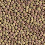 Tetra Nourriture Tabimin pour Aquariophilie 275 Tablettes de la marque Tetra image 1 produit