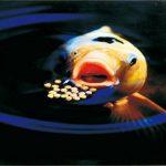 VELDA sanikoi 124622Aliments d'hiver fã ¼ R Poissons de bassin, sinkend, 3mm, Winter whead Food, 3L de la marque VELDA image 3 produit