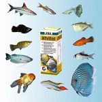 vitamine pour poisson TOP 0 image 4 produit